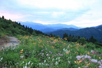 白山高山植物园 image