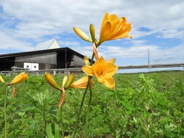 Lake Saroma Wakka Primeval Flower Garden (Ryugu Kaido) image
