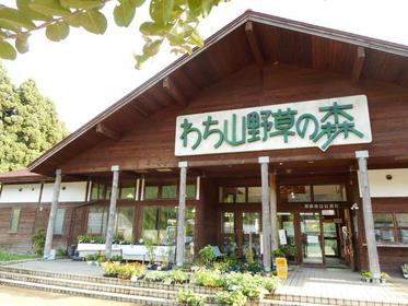 わち山野草の森 image