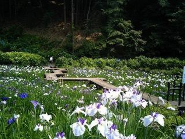花菖蒲園 image