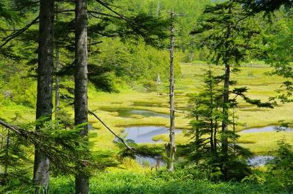 四十八池湿原 image