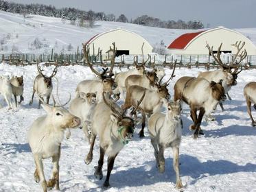 Horonobe Reindeer Ranch image