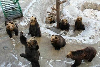 Noboribetsu Bear Park image