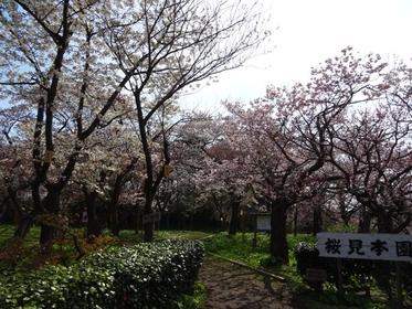 櫻見本園 image