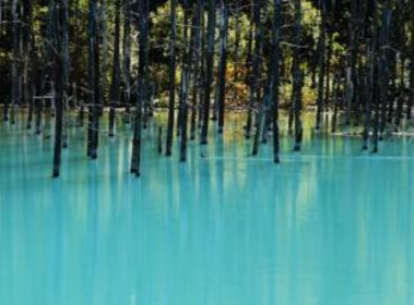 Shirogane Blue Pond image