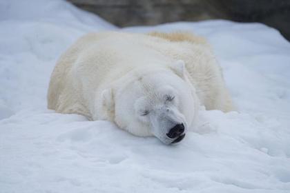 Sapporo Maruyama Zoo image