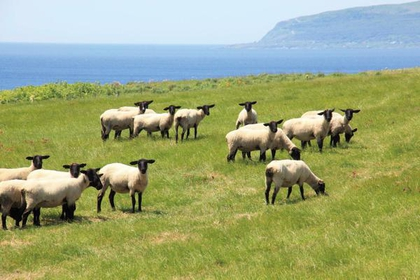 Sheep Farm image