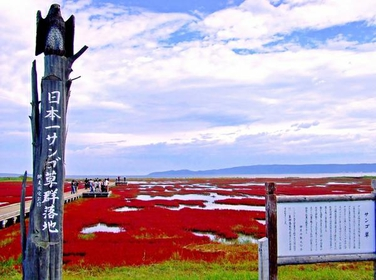 Lake Notori Coral Grass image
