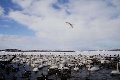 Lake Kutcharo image