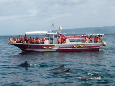 Kazusa Dolphin Watching image