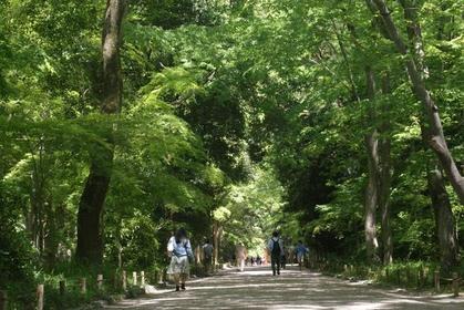 下鸭神社 image