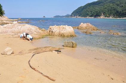 竜宮浜海水浴場 image