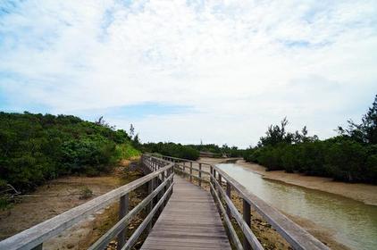 Shimajiri MangroveForests image