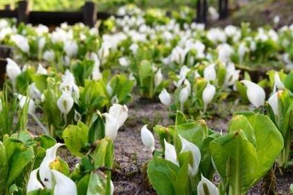 롯코고잔 식물원 image