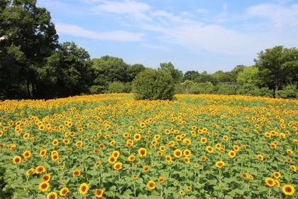 大阪市立長居植物園 image
