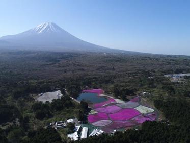富士芝桜 image