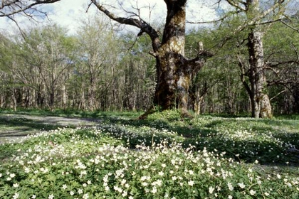 Tokusawa image