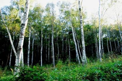 YachihoHighlandNaturalGarden image