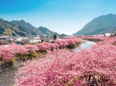 가와즈자쿠라 image