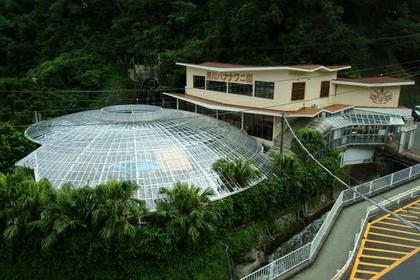 熱河香蕉鱷魚園 image