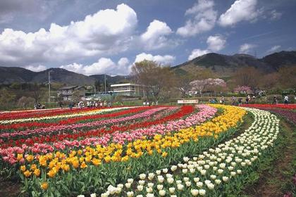 神奈川県立 秦野戸川公園 image