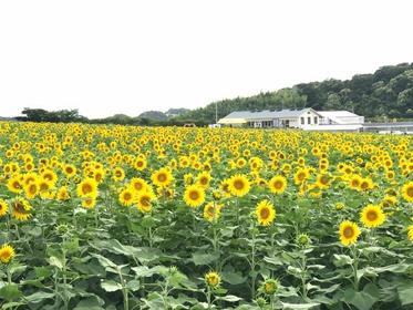 觀光農園 花廣場 image