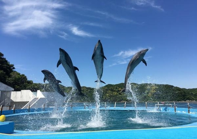 Dolphin Resort image