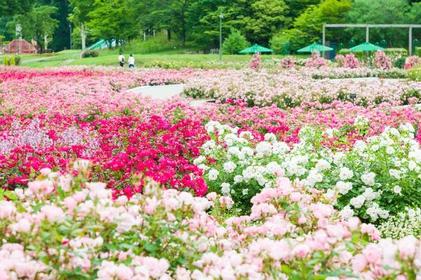 꽃 페스타 기념공원 image