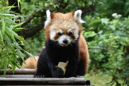 石川動物園 image