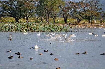 瓢湖 image