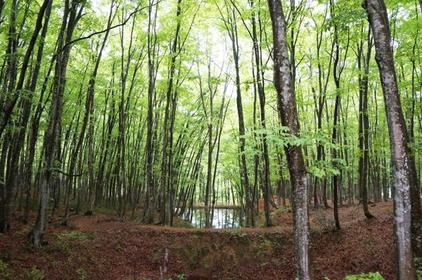 Bijin-bayashi Forest image