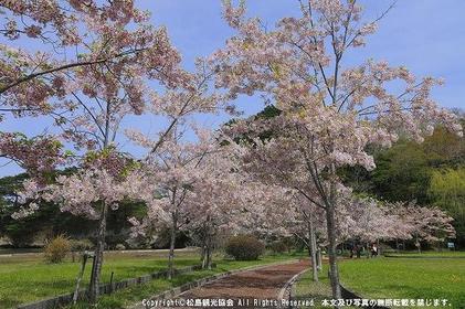 마쓰시마 image