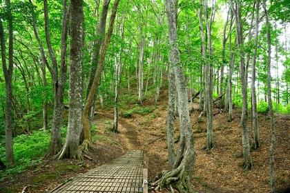 시라카미노모리 산책로 image