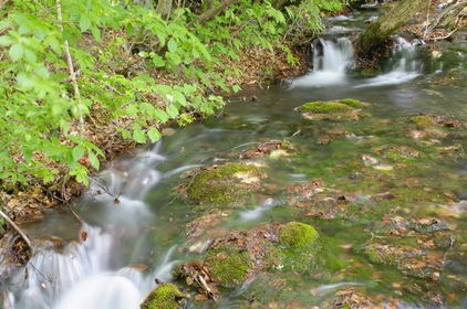 Shishigahana Marsh image