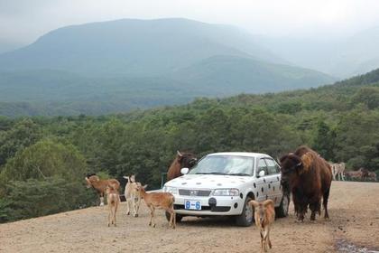 Tohoku Safari Park image
