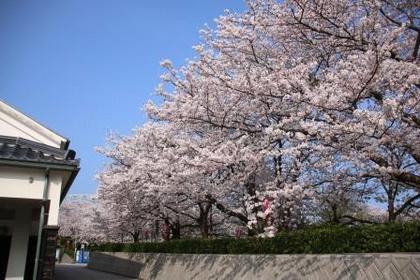 Sakai Daiba Park image