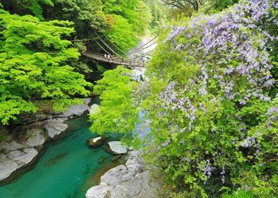 祖谷的蔓桥 image