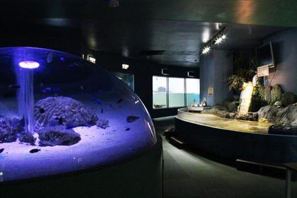 新屋岛水族馆 image