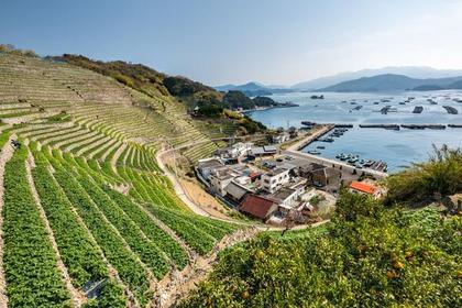 Danbata (terraced fields) in Yusumizugaura image