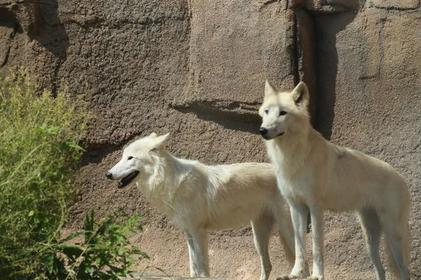 Nasu Animal Kingdom image