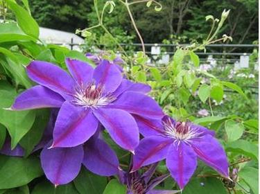 国立科学博物館筑波実験植物園(つくば植物園) image