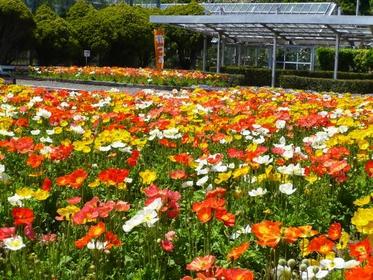 Futomi Flower Isozuri Center image