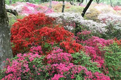 시미즈 공원 image