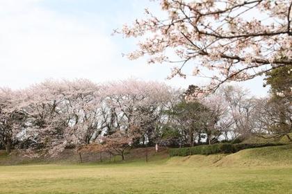 佐倉城址公園 image
