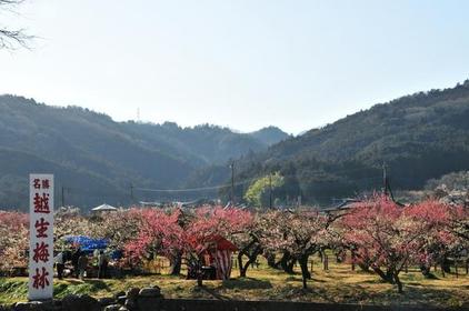 Ogose Bairin Plum Forest image