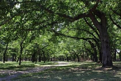 合浦公园 image