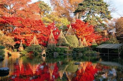 红叶公园 image