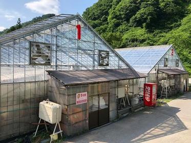 湯澤草莓村 image