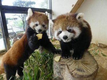 Sabae City Nishiyama Zoo image