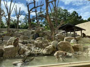 松本市アルプス公園 image